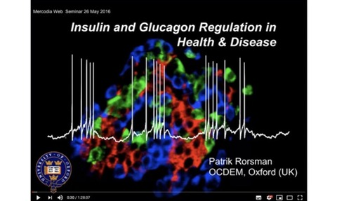 Webinar: Insulin and Glucagon Regulation in Health & Disease: Dr. Patrik Rorsman